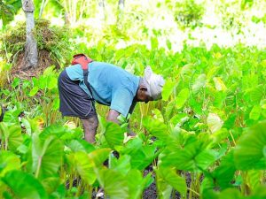 Picture of migrant worker in the field.